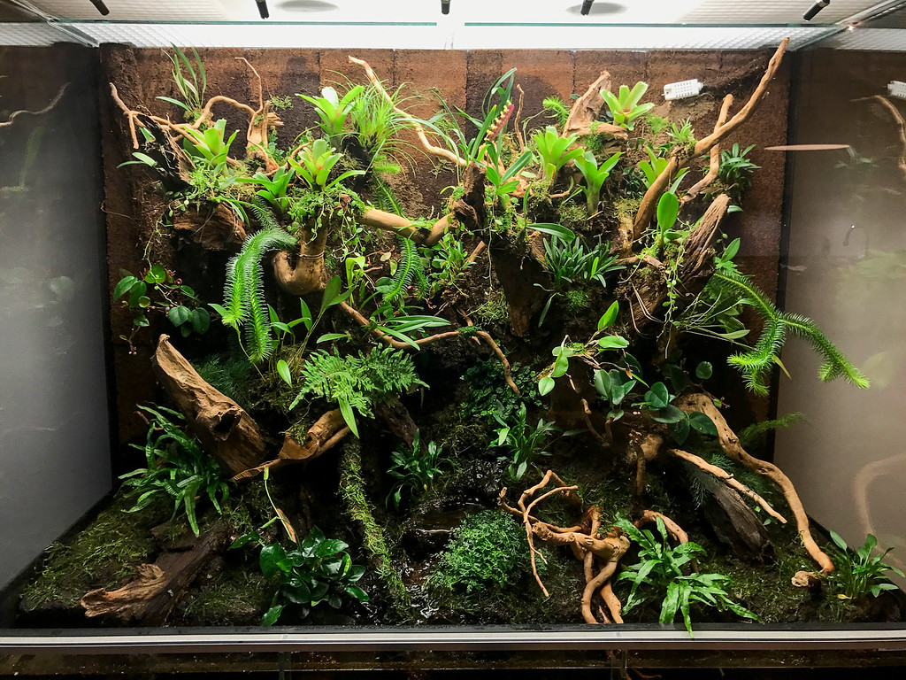 Terrarium Uses Raspberry Pi And Nodered To Grow Orchids Raspberry